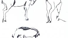 04_animals0001_o